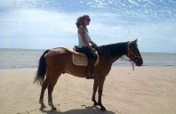 Horse Volunteer