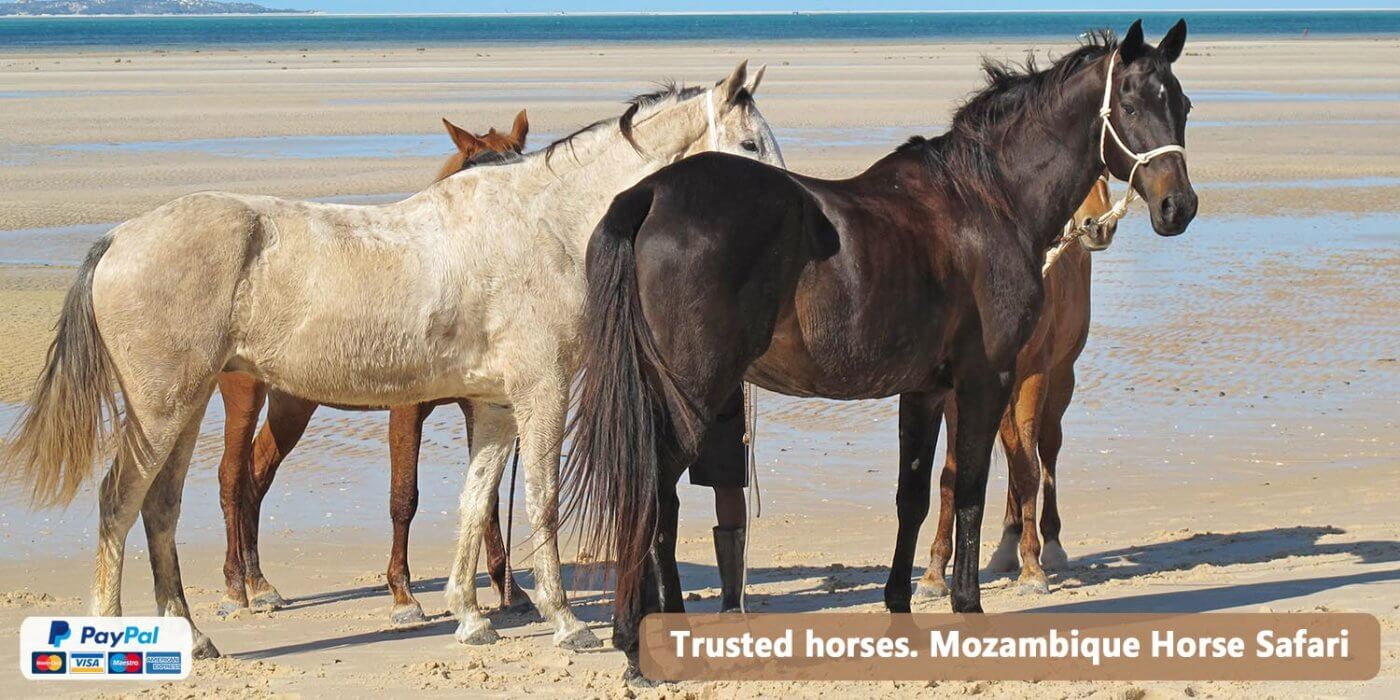 Beach Horses Zimbabwe